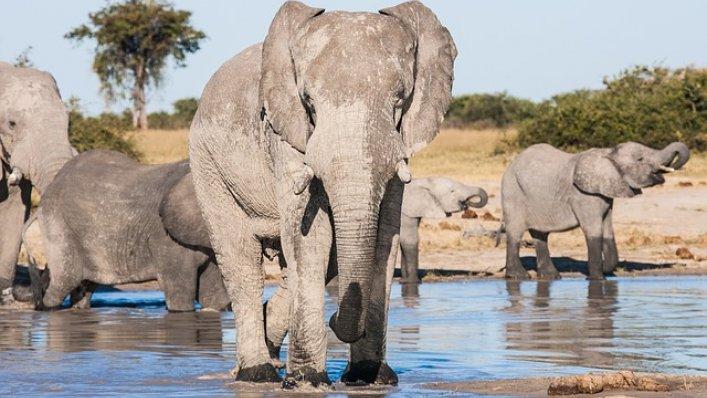 Aviva: konkurs - wygraj wyprawę marzeń do Botswany!